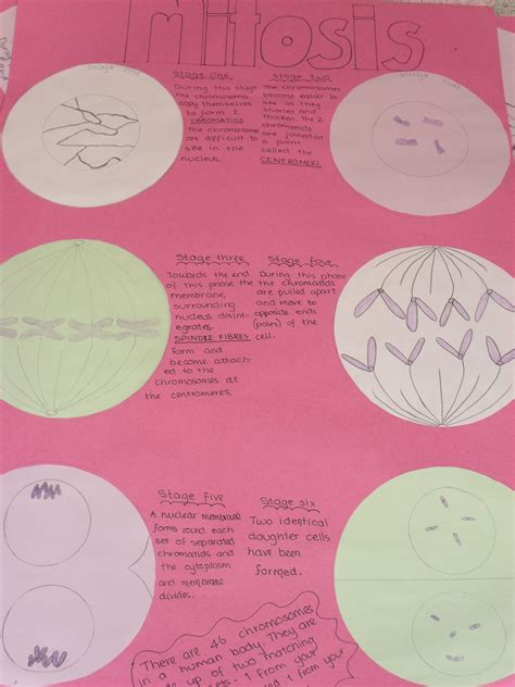 Nat 4/5 – Cell Divison and Mitosis | Mrs Matheson's Blog