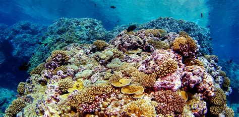 We tracked coral feeding habits from space to find out