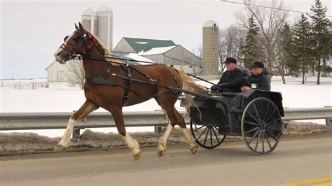 Mennonite horse and buggy - near Millbank, Waterloo County